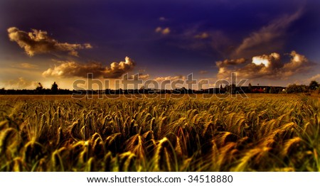 Corn field with atmospheric sky - stock photo