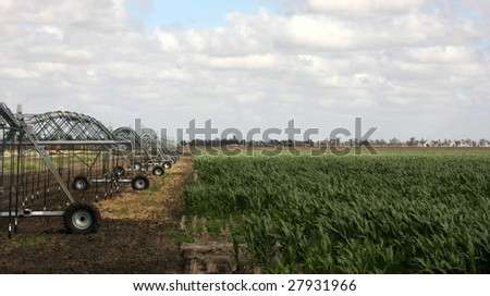 Corn field with irrigation system - stock photo