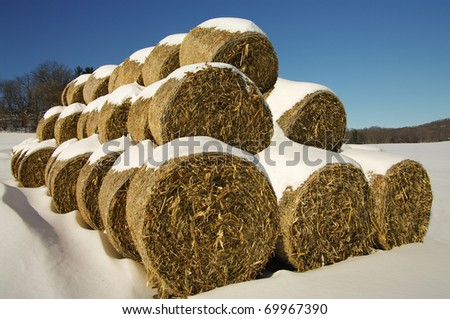 Corn Fodder Bales in Winter:  Corn stalks, leaves and cobs that were left after the fall harvest are used as animal feed and bedding during the winter months in southern Wisconsin. - stock photo