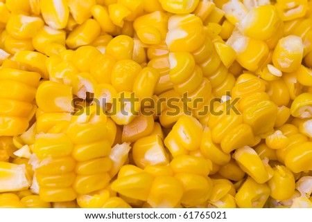 corn - food for the kid