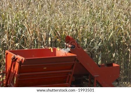 Corn gathering - stock photo