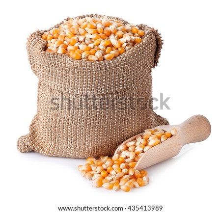 corn grains in bag with wooden scoop isolated on white background. Corn seeds in sack. Dry uncooked corn grains for popcorn - stock photo