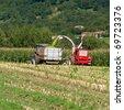 Corn harvest - stock photo