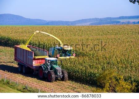 corn- harvest - stock photo