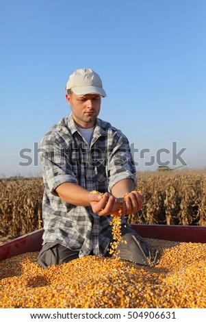 Corn harvest, farmer at trailer holding and pouring heap of seed