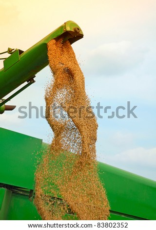 Corn harvesting - stock photo