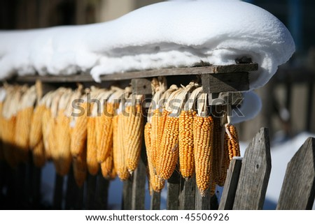 corn held on wooden fence in snow - stock photo