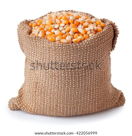 Corn in burlap bag isolated on white. Corn seeds in sack. Dry uncooked corn grains for popcorn - stock photo