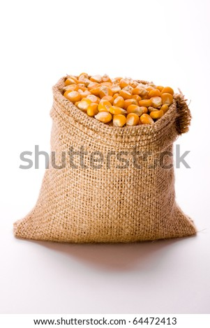 Corn in burlap sack against white background - stock photo
