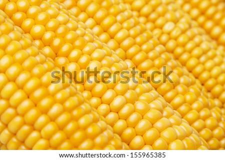 corn in detail - stock photo