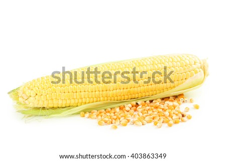 Corn isolated on a white