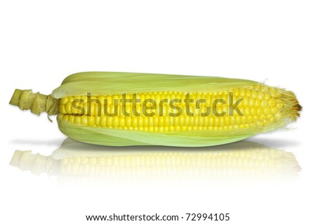 Corn isolated on white background (with path) - stock photo