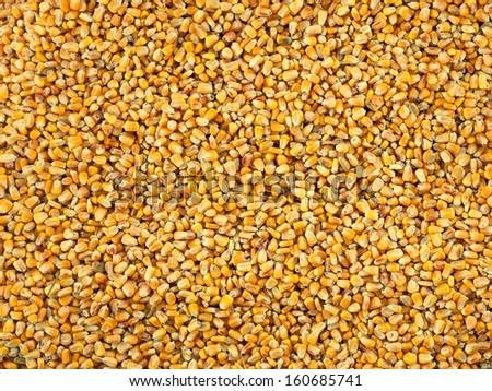 Corn Kernel background - stock photo