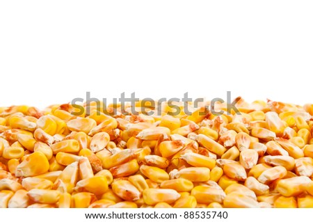 Corn kernels texture, nice agriculture background image - stock photo