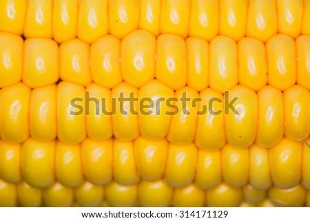 Corn macro large grains as background texture - stock photo