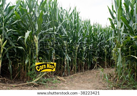 Corn Maze Entrance - stock photo