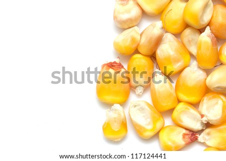 corn on a white background. macro - stock photo