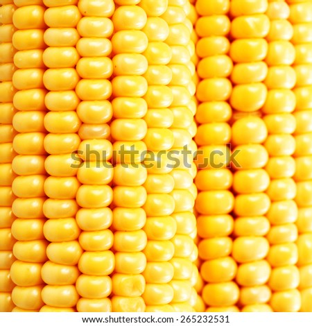Corn on the cob kernels close up shot  - stock photo