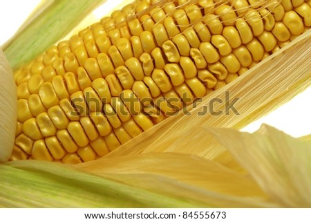 corn on the cob on a white background