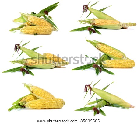 corn ripe and sweet  isolated on white background - stock photo