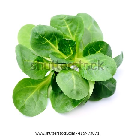 Corn salad,lamb's lettuce isolated on white