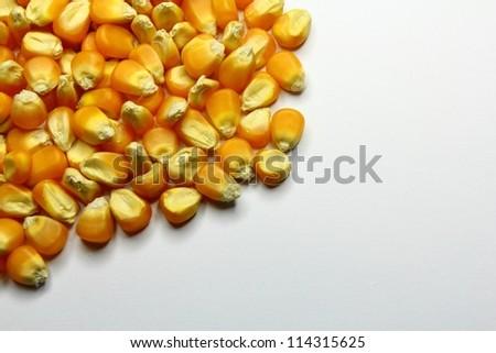 Corn seed - stock photo