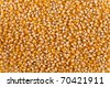 Corn seed background - stock photo