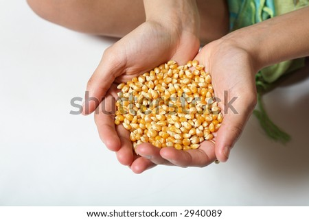 Corn seed in out-stretched hands.