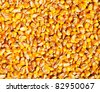 Corn seed texture, agriculture background - stock photo