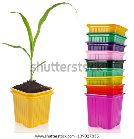 corn seedlings in a disposable colorful plastic flowerpot  isolated on white background - stock photo