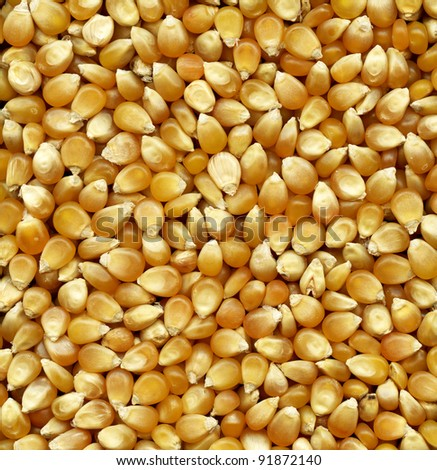 Corn seeds background for your design - stock photo