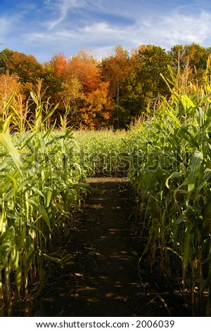 corn stalks with autumn trees - stock photo