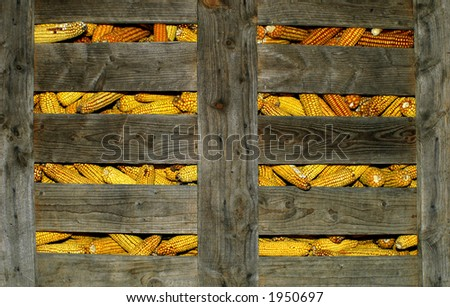 corn stored in a wood cage - stock photo