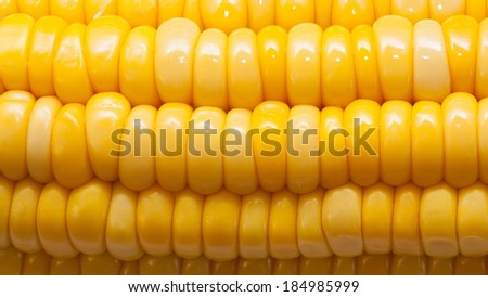 Corn texture macro - stock photo