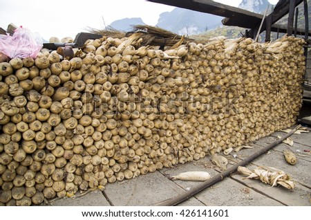 Corn with shell dry for breeding in Vietnam - stock photo