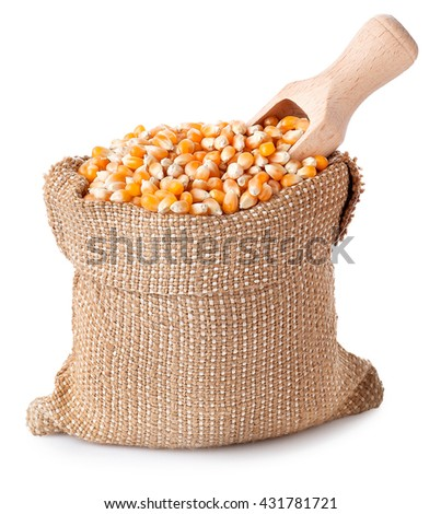 Corn with wooden scoop in burlap bag isolated on white. Corn seeds in sack. Dry uncooked corn grains for popcorn - stock photo