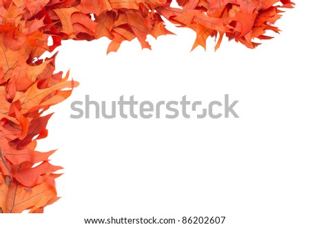 Corner border of colorful red oak leaves - stock photo