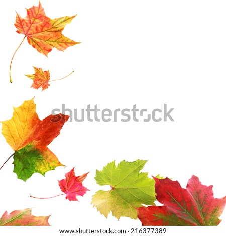 Corner border of colorful vivid variegated autumn or fall leaves with multicolored patterns with plenty of copyspace isolated on a white background - stock photo