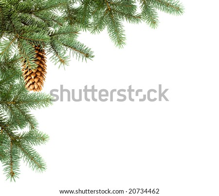 corner,  branch of fir with cone - stock photo