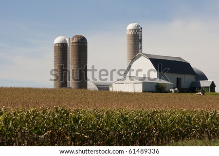 cornfield and a barn  with silos in rural wisconsin - stock photo