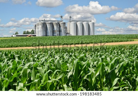 Cornfield and Silo in Europe - stock photo