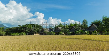 Cornfield and tree on hill - stock photo