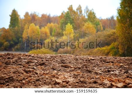 cornfield in autumn - stock photo