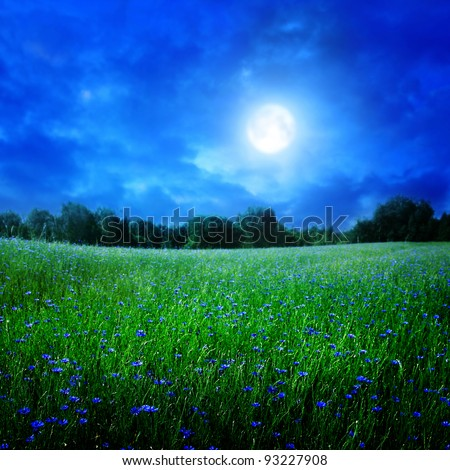 Cornflower field under moon light. - stock photo