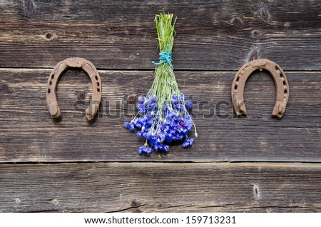 cornflower fresh bunch on old wooden farm wall and two rusted horseshoe - stock photo