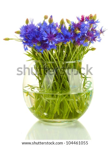cornflowers in glass vase isolated on white
