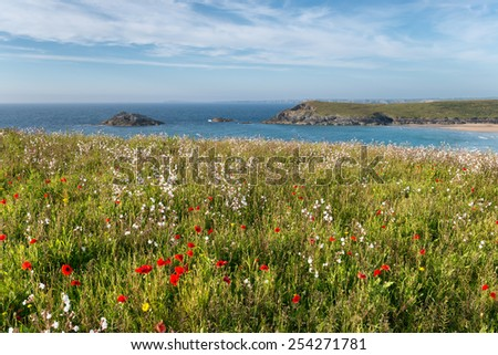 Cornish wildflower meadow on cliffs at Pentire Head near Newquay in Cornwall - stock photo