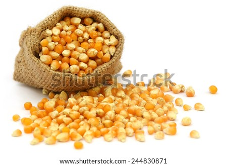 Corns in sack bag over white background - stock photo