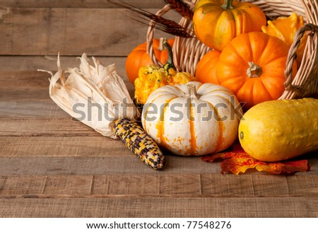 Cornucopia of Fall Pumpkins, Gourds, and Corn in Rustic Setting - stock photo