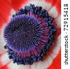 Coronaria Flower Centre (Anemone) Ranunculaceae - Macro Image - stock photo